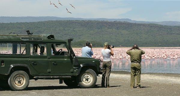 Loldia House Flamingo Safari