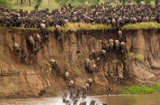 River Crossing In The Northern Serengeti