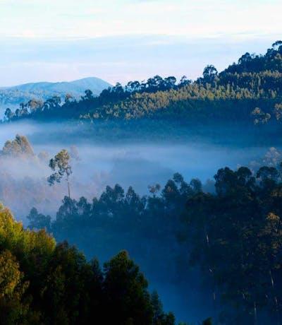 Nyungwe Forest C Rwanda Tourist Board