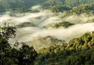 Nyungwe  Forest  One Only