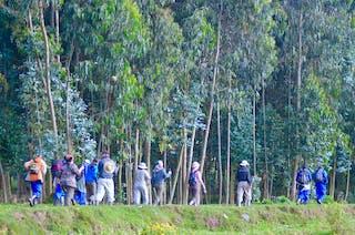 Rwanda Gorilla Tracking A Craig Kaufman