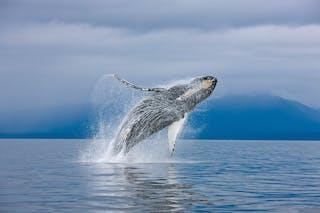 Sao Tome Whales 2