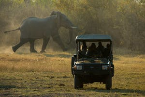 Zarafa  Camp Elephant Game Drive