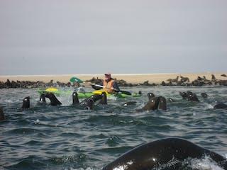 Seal Kayaking Namibia