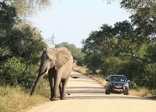 Self Drive Kruger National Park