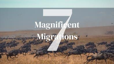 Seven Migrations
