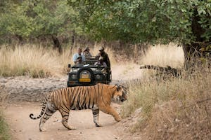 On Safari In  Ranthambore At  Sher  Bagh