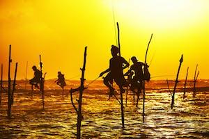 Sunset View Of Fishermen Fishing At  Galle