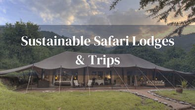 Sustainable Lodges And Trips
