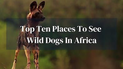Top 10 Places To See Wild Dogs