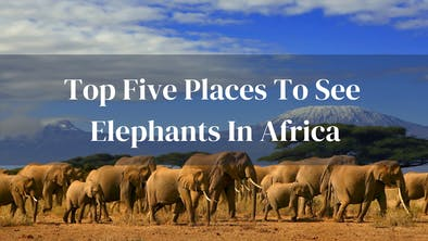 Top Places To See Elephants In Africa