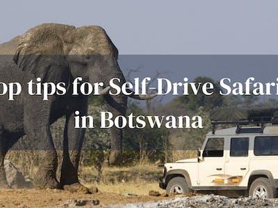 Top Tips Self Drive Safaris Botswana