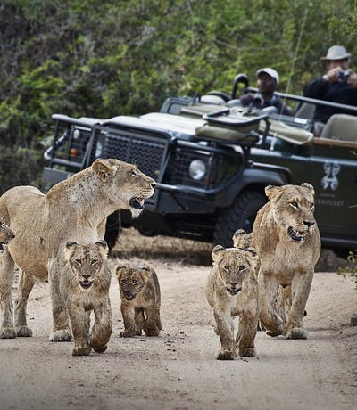 Tsalala Cubs And Vehicle