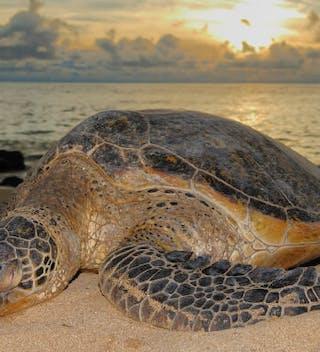 Turtle Kosi Day