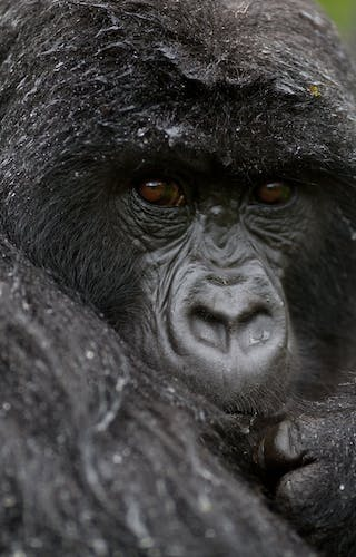 Bwindi Gorilla Volcanoes Safaris