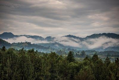 Bwindi  Landscape  Volcanoes  Safaris
