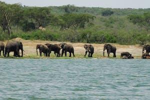 Elephants  Bufaloes  Qenp  Robert  Brierley