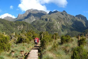 Trekking  Rwenzoris  Rwenzori  Mountains  Np