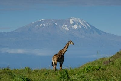 View Kilimanjaro From