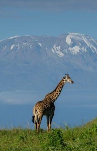 View Kilimanjaro From