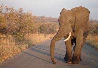 Jja14 Kruger Elephant