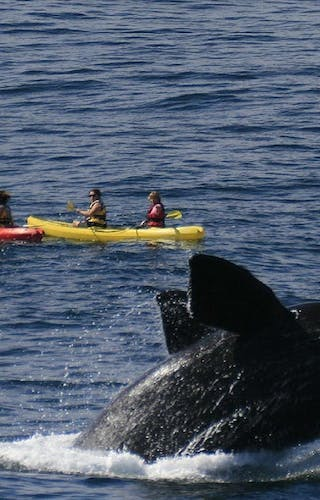 The Marine Whale Watching