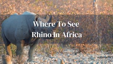 Where To See Rhino