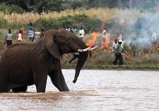 Wildfireelephant