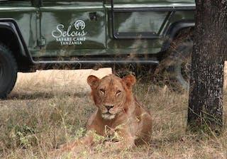 Wonderful Game Viewing At Selous Game Reserve