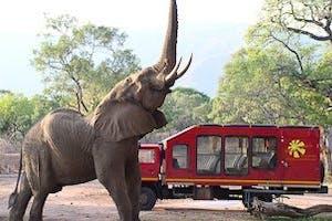 Zma16 Elephant And Tour Bus