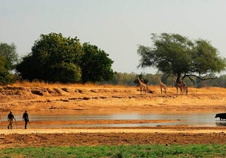 Zambia Walking Safari Nsolo