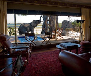 Zarafa Camp Room View Of Elephant Visiting