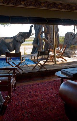 Zarafa Camp Room View Of Elephant Visiting